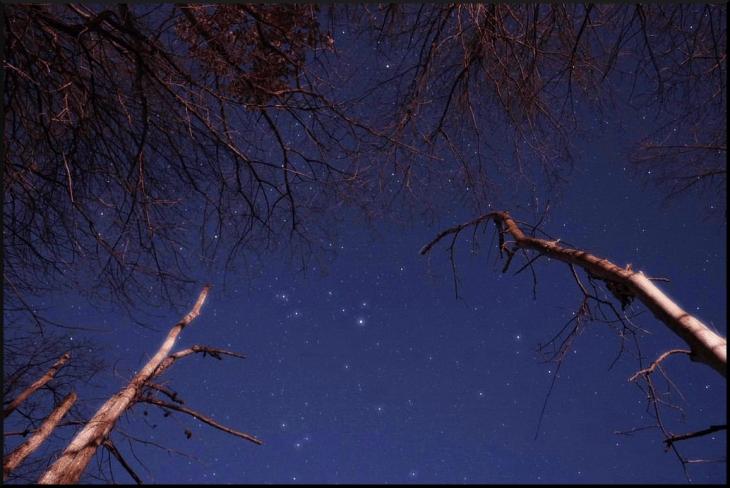 treeandstars