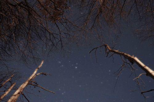 starstrees4-1