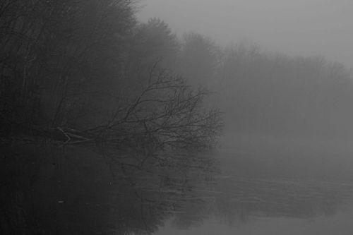 fog2-1